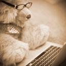 Creare un blog | aziendale o con Wordpress